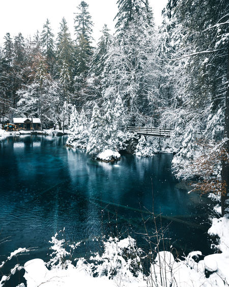 The Week On EyeEm Winter Beauty In Nature Blausee Blue Water Cold Cold Temperature Day Frozen Ice Lake Nature No People Outdoors River Scenics Snow Switzerland Tranquil Scene Tranquility Tree Water Winter