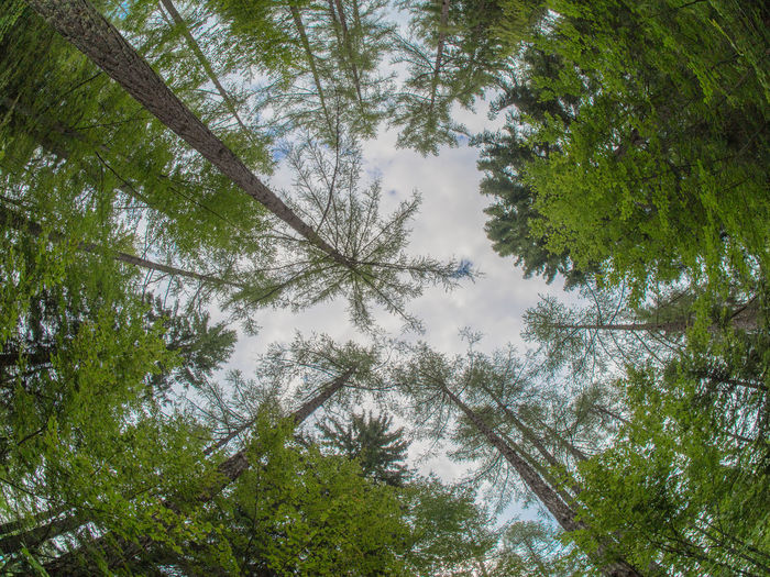 Around Tree Beauty In Nature Branch Circle Tree Day Fisheye Fisheye Forest Fisheye Tree Forest Forest Trees Growth Leaves Low Angle View Nature Nature No People Outdoors Sky Tree Tree Tree From Below Tree Trunk Trees And Sky Trunk Tree Trunks
