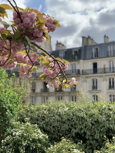 Paris Plant