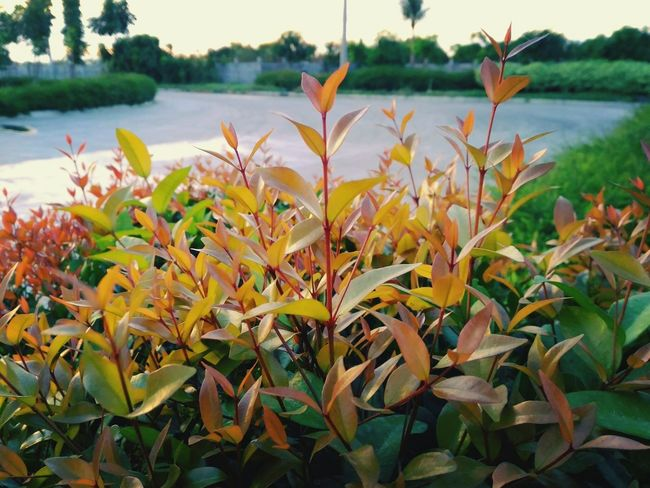 EyeEm Taking Random Pictures  Of Nature On A Near Twilight Afternoon Sky ~ Beauty In Nature Close-up Day Outdoors EyeEm Best Shots Fresh On Eyeem  EyeEmNewHere Afternoon Plants Freshness EyeEm Nature Lover Growth Plant Inner Peace