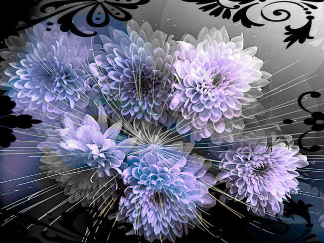 EyeEm Flower Flower_Collection Loving Flowers EyeEm Nature Lover In The Bigining They Was White!