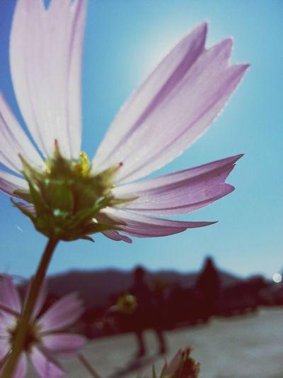 Flower By Samsung Galaxy Note2