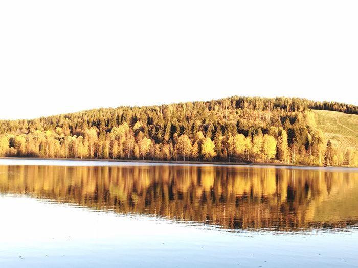Sunshine Fall Beauty Fall Colors Fall Beauty In Nature Lake