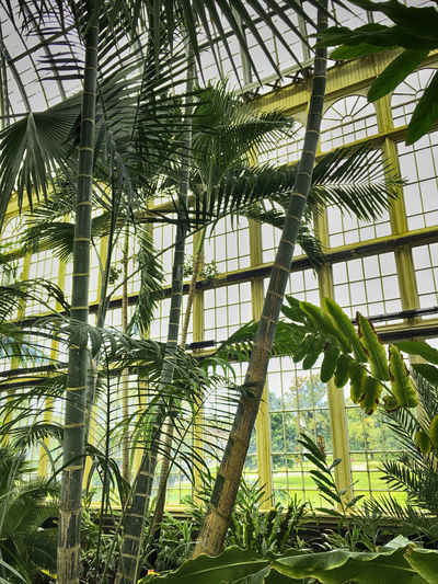 Plant Leaf Tree Green Color Palm Tree Tropical Climate Bamboo - Plant Low Angle View Greenhouse Tropical Tree Palm Leaf Botanical Garden Botanical Gardens Baltimore Maryland