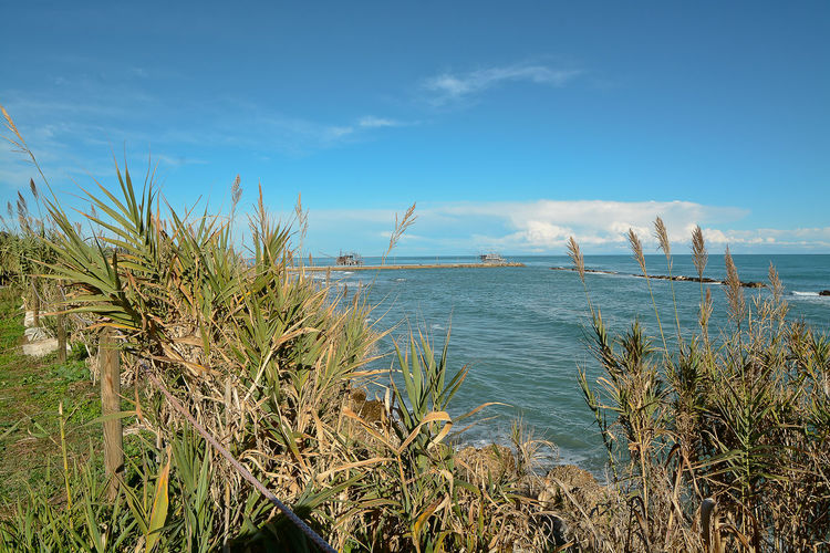 Beach Beauty In Nature Blue Cloud - Sky Day Grass Growth Horizon Over Water Marram Grass Nature No People Outdoors Scenics Sea Sky Sunlight Tranquil Scene Tranquility Water