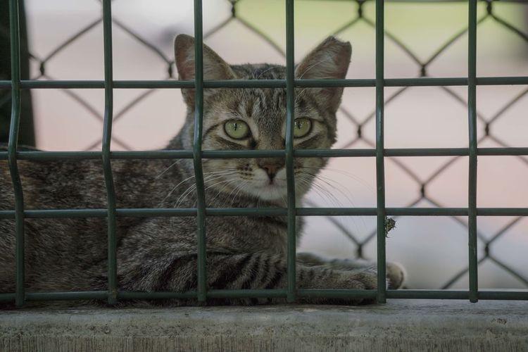 Portrait of cat seen through fence