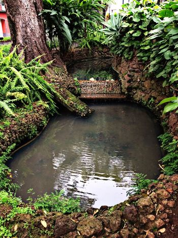 Nature Tranquility Growth Outdoors Scenics Beauty In Nature Plant Water No People Tree Garden Beautiful Tranquility Tranquil Scene