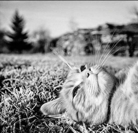 ♥❤ Blackandwhite Black And White First Eyeem Photo Cat Cat♡ Cats Beautiful Animals Eyes 😻😽😻😽😸😼