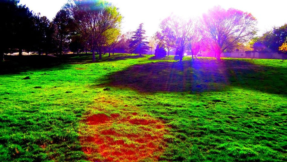 DownInThePark.3:0402302016 Albuquerque Albuquerque New Mexico Beauty In Nature Field Footpath Grass Grassy Green Green Color Growth Landscape Lawn Lush Foliage Nature No People Outdoors Park Park - Man Made Space Plant Pyschedelic Scenics Sunlight Surrealism Tranquil Scene Tranquility