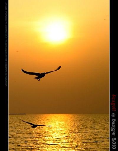 Sunset Thailand_allshots