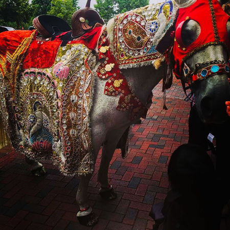 In an Indian wedding, before the actual ceremony begins, the groom rides a horse, dressed like so, to be introduced to the wedding ceremonies Arts Culture And Entertainment Multi Colored Outdoors Day Horse Photography  Bharat Barat Connected By Travel