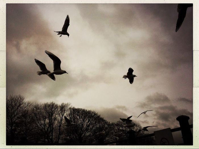 Eye4photography  Flying Bird Animal Themes Animals In The Wild Spread Wings Low Angle View Mid-air Silhouette No People Sky Outdoors Day Nature Togetherness Eye4blackandwhite Monochrome Photography IPhoneography