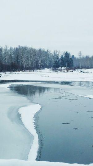 Tree Winter Ice