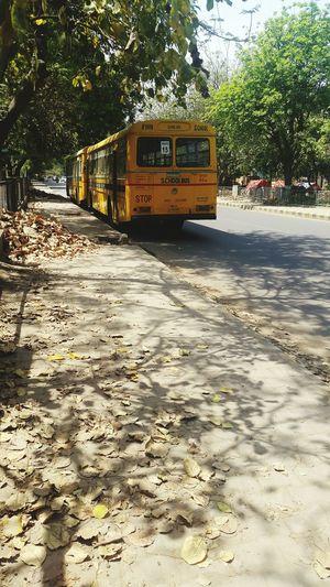 Shocase April Summer Shadows & Lights Greenry School Bus