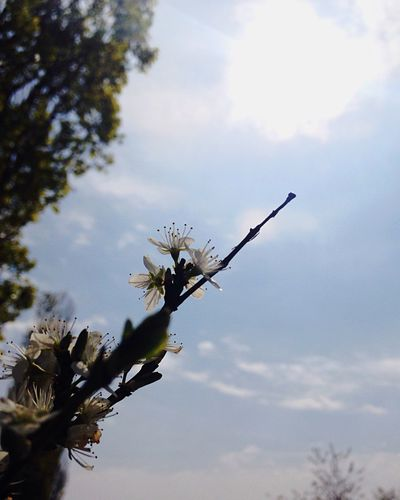 Because world is full of chances Spring My Favorite Photo Moment Flower Sun Ray