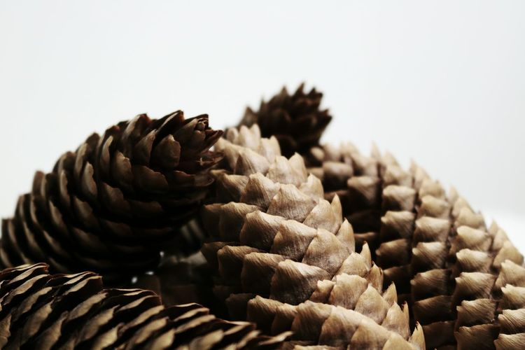 Close-up of pine cones over white background