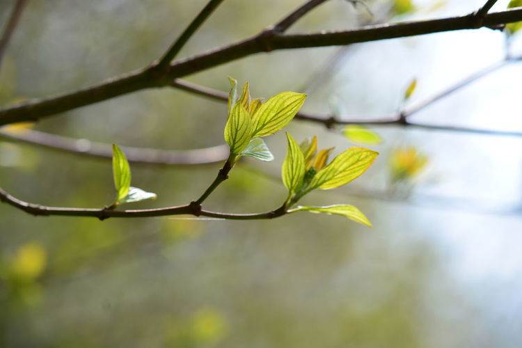 Plant Growth Plant Part Leaf Close-up Nature Beauty In Nature Green Color Focus On Foreground Day No People Tree Branch Vulnerability  Fragility Selective Focus Outdoors Twig Flower Freshness Sepal