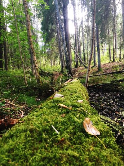Forest Tree Tree Trunk Nature Growth Wilderness Fallen Tree Norway
