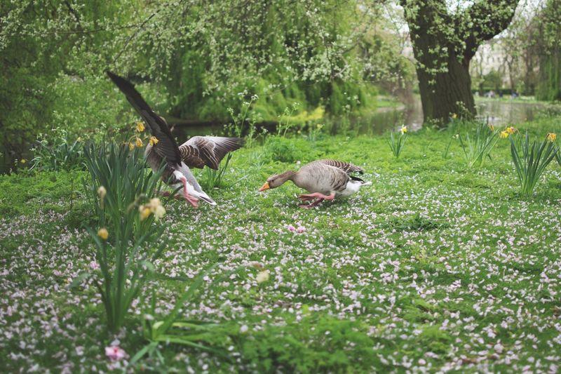 Birds in park