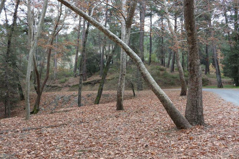 Autumn Troodos