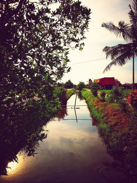 canal to water paddy field Canal Water Reflections Water Parit Bendang Paddy Field Tree Water Nature Outdoors Beauty In Nature Lake Growth Day Sky No People Scenics Freshness