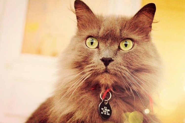 My Cat Charlie. Pets Front View Animal Themes Kitten Outdoors