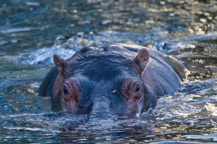 Zoo Animal Themes Close-up Hippotamus  No People Outdoors Water