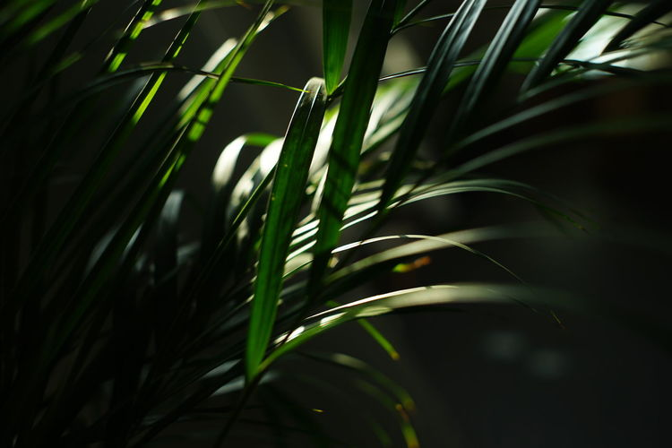 Close-up of plant