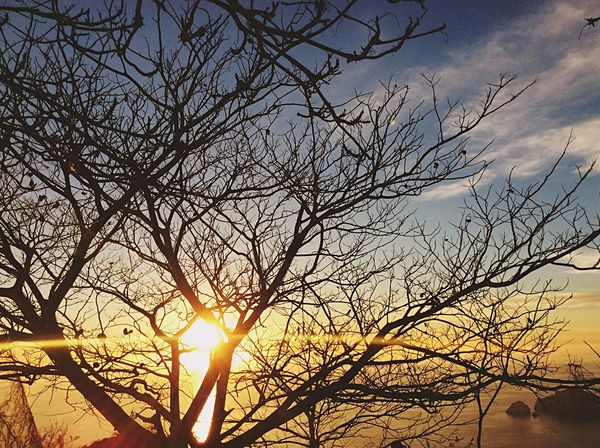Sunset Bare Tree Tree Sun Sky Beauty In Nature Nature