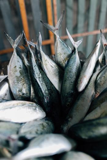 Raw fish Fish