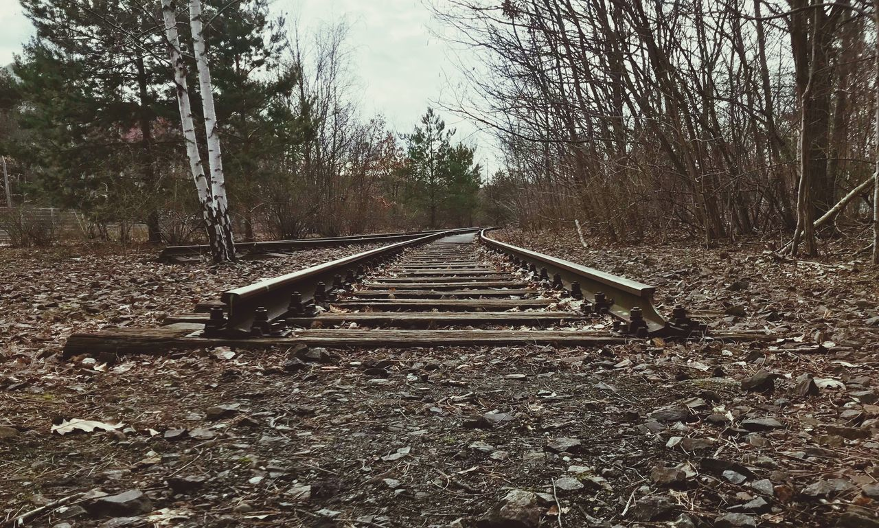 SURFACE LEVEL OF RAILROAD TRACKS AGAINST TREES