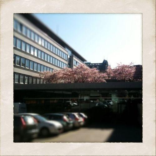 Blüten in der Stadt