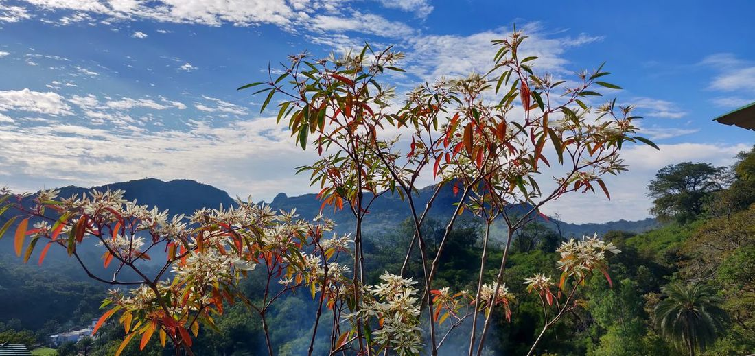 Scenic view of flowering tree by mountains against sky