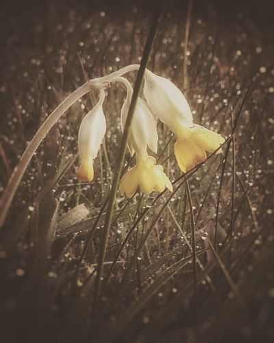 Flowers Frost Bokeh Sparkle Grass Nature Photography Nature Nature Shots Moody Nature Photography