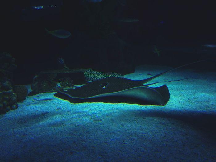 gliding Aquaria Klcc Camera+ Malaysia Mextures Underwater UnderSea Stingray