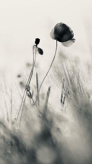 Digital composite image of flower on field