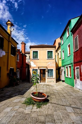 Burano Burano, Italy Burano, Venice Italy Venice Architecture Building Exterior Built Structure Potted Plant Plant Sunflower Beautifuldestinations Beautiful Place Painted Houses Colourful Houses Shabby Charming Houses Colourful Colourfulbuilding Rough Charming