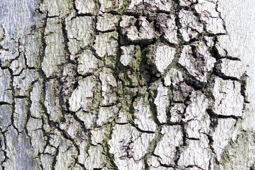 Backgrounds Close-up Day Nature Nature Oak Outdoors Rough Rügen Textured  Tree Tree Trunk Treebark Vilm Wood