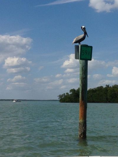 Pelican Serenity Fort Myers Animal Themes Animals In The Wild Beauty In Nature Bird Cloud - Sky Day Florida Horizon Over Water Nature No People One Animal Outdoors Pelican Perching Scenics Sea Tranquil Scene Water