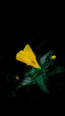 Studio Shot Yellow Underwater Black Background No People Fragility Close-up Water Night UnderSea Nature Beauty In Nature Outdoors Iphone Background Phone Background Backgrounds Samsung Background Black Background Nature Plant Beauty In Nature Green Color Flower Head Lost In The Landscape Day