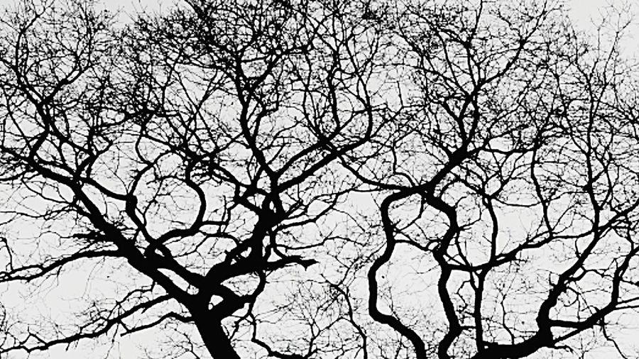Alte knorrige Eiche Oak Tree Oak Tree TreePorn Baum Baumkrone Schwarzweiß Blackandwhite Black & White Licht Und Schatten Light And Shadow Winter Stimmung Winter Melancholy Winterstimmung Pattern Pieces