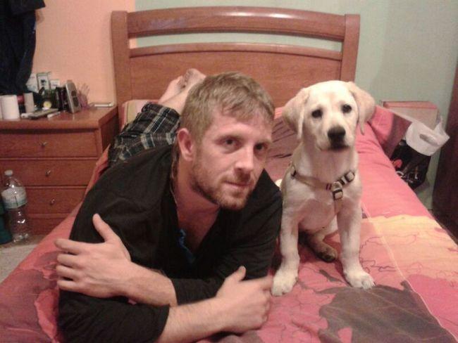 Buenas noches Labrador Retriever Puppy Dog