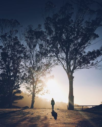Adult Beauty In Nature Branch Day Full Length Leisure Activity Nature One Person Outdoors People Real People Rear View Silhouette Sky Standing Sunset Tree Walking Women