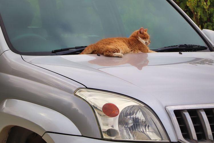 Cat sitting in car