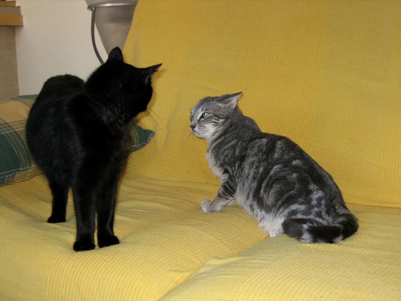 domestic cat, pets, feline, domestic animals, animal themes, two animals, cat, mammal, no people, black color, indoors, sitting, yellow, togetherness, day