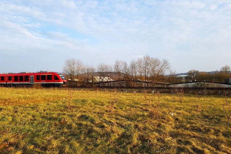 Train - Vehicle