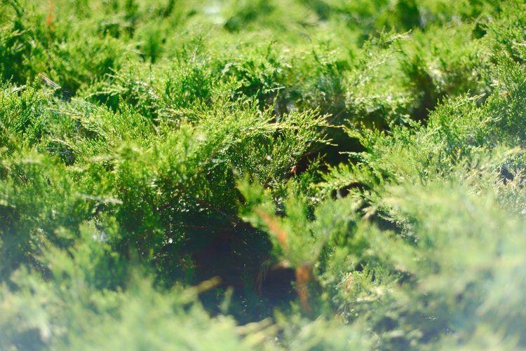 Nature Grass No