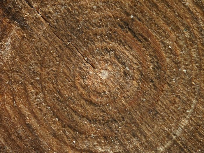 Backgrounds Brown Close-up Day Full Frame Hardwood Nature No People Outdoors Pattern Textured  Tree Tree Ring Wood - Material Wood Grain Year Rings