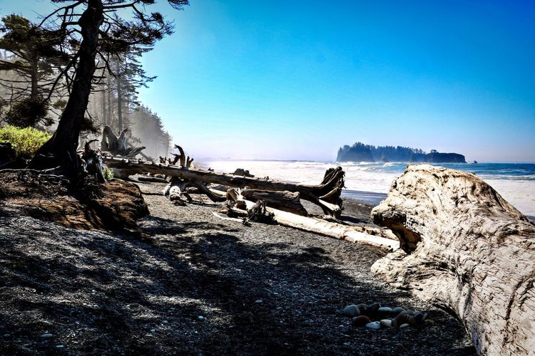 Rialto Beach Olympic National Park Sky Water Nature Sea Beach Tree Tranquility Beauty In Nature No People Blue Scenics - Nature Tranquil Scene Horizon Over Water