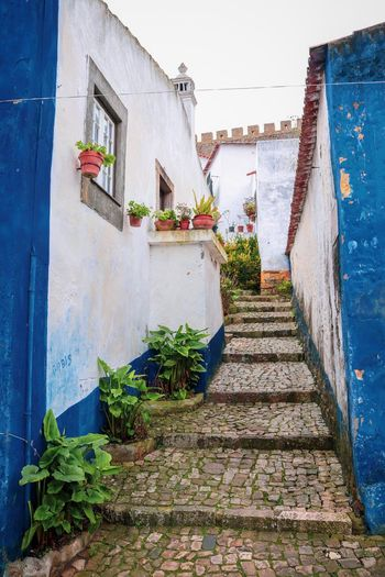 Rural Rural Scene Óbidos  Portugal Architecture Building Exterior Built Structure Plant Potted Plant Nature Flower Flowering Plant Building Staircase No People Wall - Building Feature Day Growth Sky Residential District The Way Forward Steps And Staircases Direction House #urbanana: The Urban Playground A New Beginning